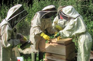 bee conservation project